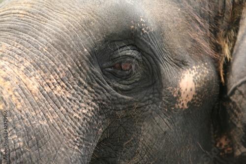 Fototapeten,elefant,elefant,auge,tier