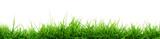 Grass - 42337757
