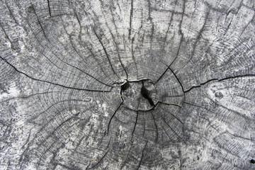 Verwittertes Holz als Hintergrund