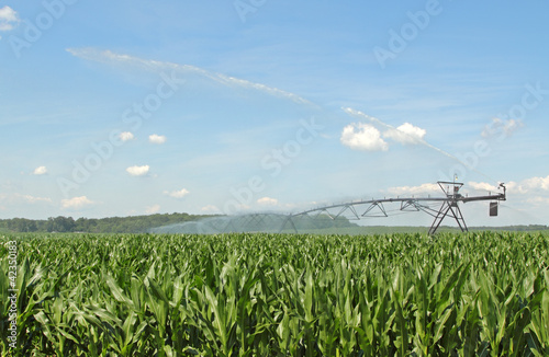 Watering Corn Crop