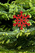 Red (artificial) snowflake ornament