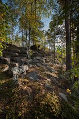 В лесу на каменистом острове