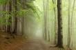 Fototapeten,frühling,trampelpfad,pfad,nebel