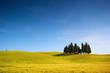 Campo di grano con cipressi e cielo blu, italia