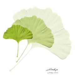 Collage mit Blättern des Ginkgo