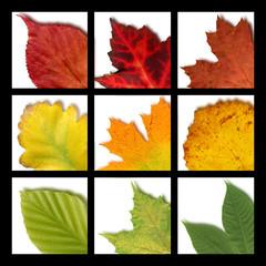 Mosaik mit farbigen Blättern