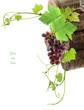 """concept """"de vigne en vin"""""""