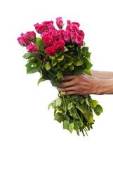 Pink rose  for lover