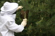 Récupération d'essaim d'abeilles