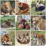Fototapety Animals