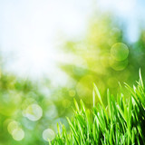 Fototapety Abstract natural backgrounds with green grass and beauty bokeh