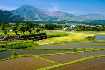 阿蘇の山々と水田