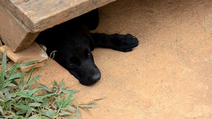 young black dog open eyes under wood ladder
