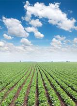 Rolnictwo, soja zielone pola roślin na wiosnę