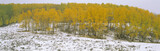 Autumn Snow and Aspens, Near Ridgeway, Colorado