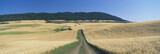 Dirt road through wheat field, Kamiak Butte, S.E. Washington