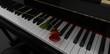 Rosa su pianoforte