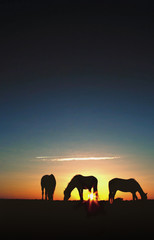 Horses Grazing at Sunrise Silhouette
