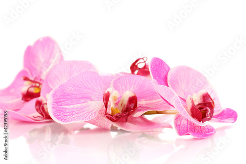 Fototapeten,blooming,orchidee,isoliert,weiß