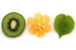 Kiwi flower, kiwi leaf and kiwi fruit
