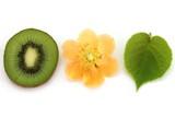 Kiwi flower, kiwi leaf and kiwi fruit