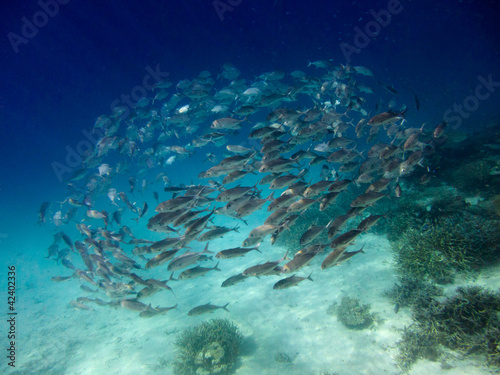 School of fish,Maldives
