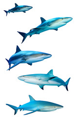 Sharks isolated on white background