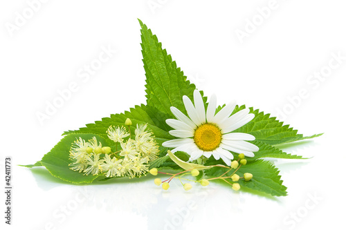 chamomile, nettle leaves and lime flowers on a white background