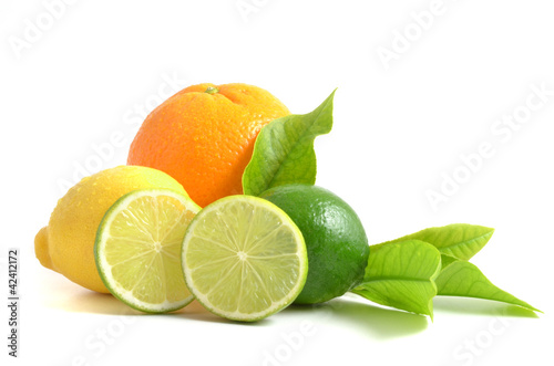 Arrangement mit Zitrusfrüchten, citrus fruits