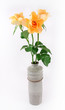 Yellow rose in vase on white background