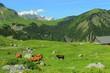 Alpage d'Aravis