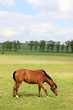 Brown Horse on the green Field