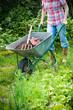 Gardener with a wheelbarrow full of humus