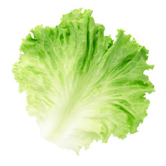 Green salad leaf isolated, clipping path included