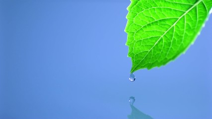 Leaf and water, Slow Motion