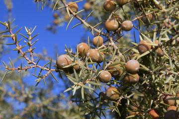 plantas de la sierra del Segura