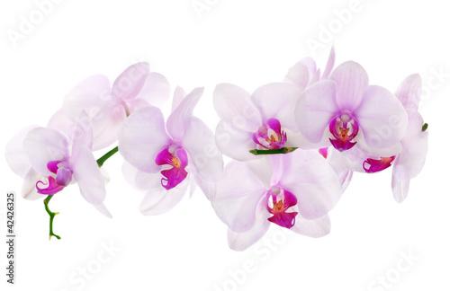 Fototapeten,orchidee,foto,isoliert,blume
