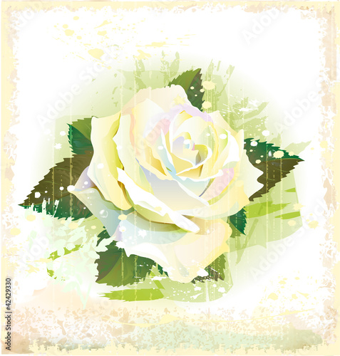 vintage illustration of white rose