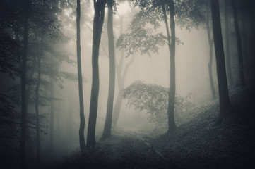 silhouette of trees in a forest with fog