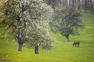 landscape with flowers trees and horse