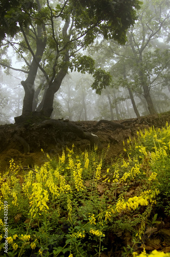 flowers and trees in a forest