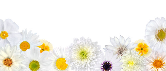 Selection of White Flowers at Bottom Row Isolated