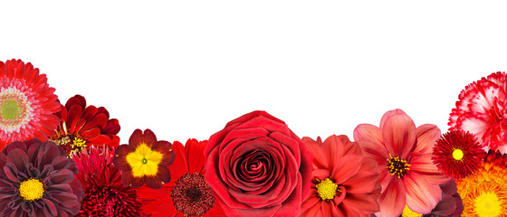 Selection of Various Red Flowers at Bottom Row Isolated