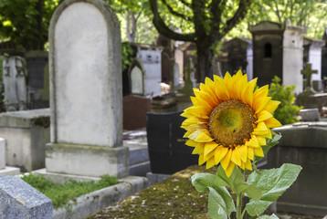 Historischer Friedhof in Paris, Frankreich, mit Sonnenblume