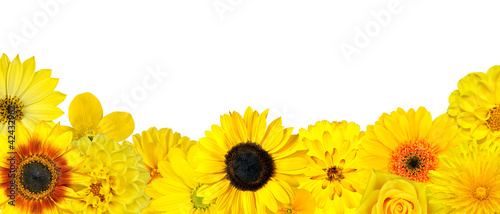 Selection of Yellow Flowers at Bottom Row Isolated