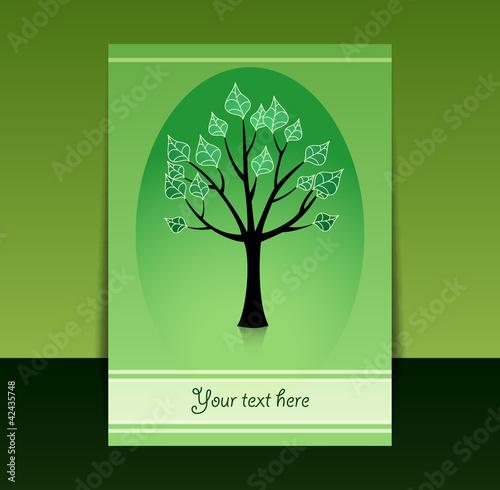 summer birch tree