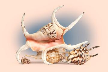 Sea shells in retro style.