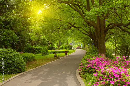 Summer park road - 42439524