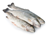 Three fresh trout fish isolated
