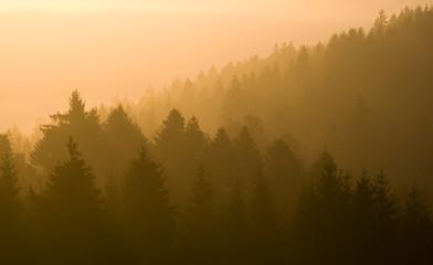 Sonnenaufgang über Waldlandschaft